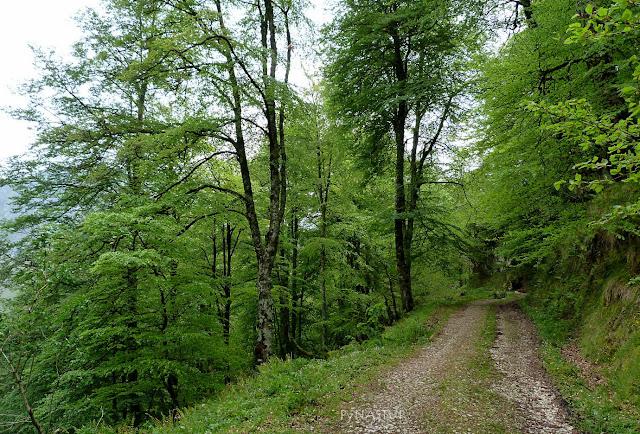 Bosque del Monte Corbera - Parque Natural de Redes - Reserva de La Biosfera