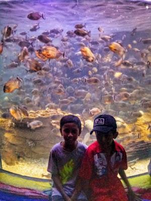 Liburan ke Sea World Jakarta