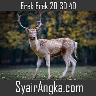 Erek Erek Rusa di Buku Mimpi 2D 3D 4D Lengkap