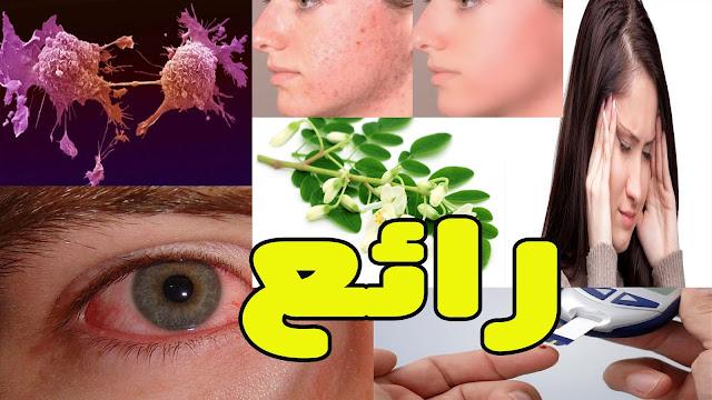 نبتة المورينغا... سلاحك للمحافظة على جمالك وصحتك وشبابك اكتشف فوائدها..!!