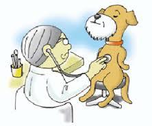cães idosos e a dor