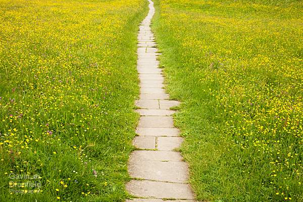 muker wildflower meadows walk upper swaledale yorkshire dales