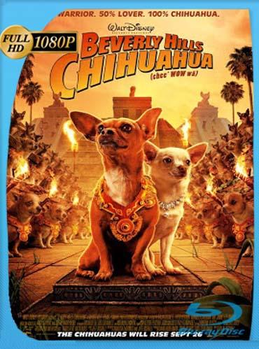 Una Chihuahua De Beverly Hills 1 (2008) HD [1080p] Latino [GoogleDrive] SilvestreHD