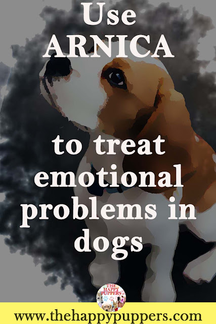Arnica can be used to treat deep rooted emotional problems in dogs