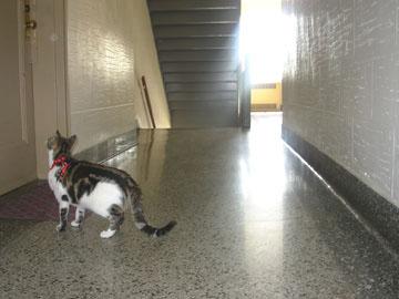 Cat Won T Walk On Carpet