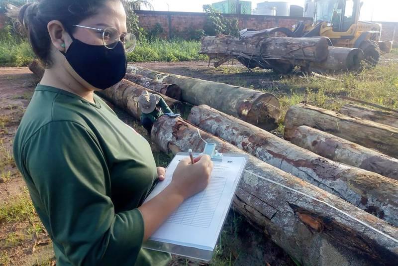 Semas divulga o balanço total da maior apreensão de madeira do ano