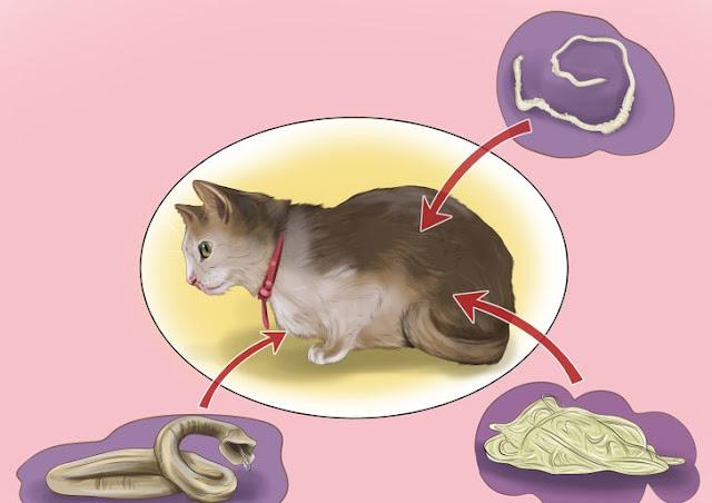 Tips Atasi Cacingan Pada Kucing