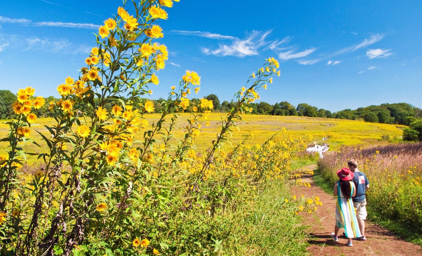 Paseo entre flores silvestres en las praderas (Meadow Garden) en Longwood Gardens