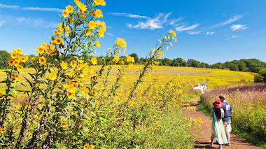 Meadow Garden. Pasear por las praderas de Longwood Gardens