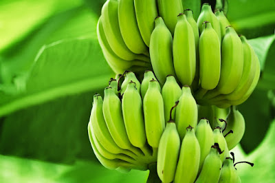 farinha-lowcarb-banana-verde