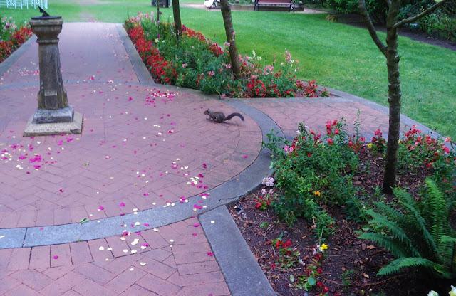 esquilo em um jardim