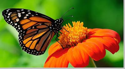 Simbiosis mutualisme - berbagaireviews.com