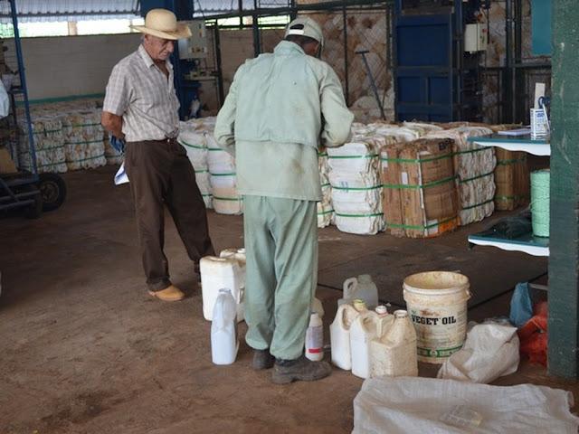'Dia Nacional do Campo Limpo' é celebrado em Cacoal