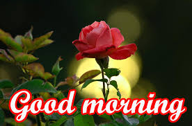 beautiful good morning photos of flowers