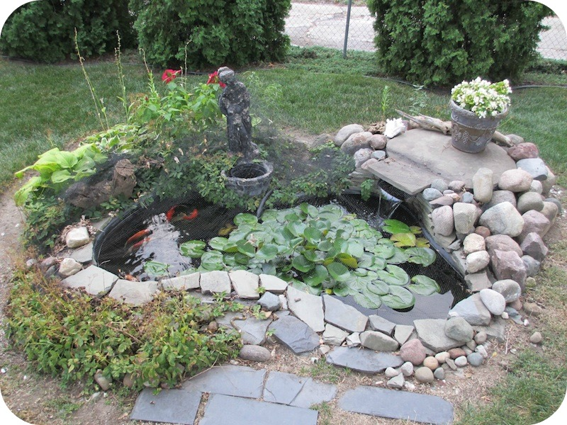 Detroit video daily where 39 s buster the backyard koi pond for Small garden fish pond designs