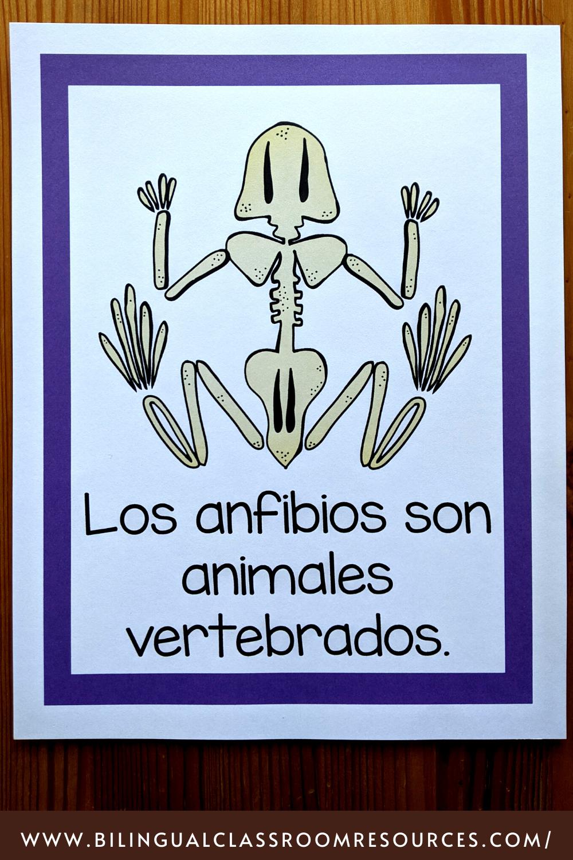 Animal Classification Posters in Spanish- Grupos de animales
