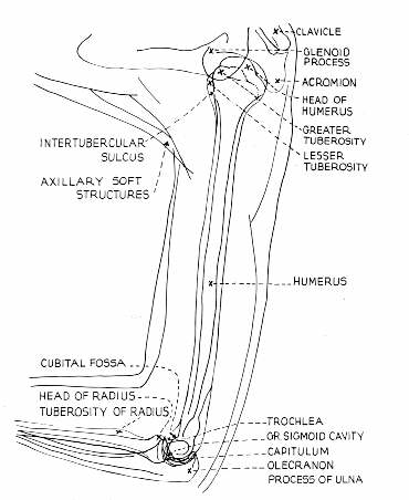 Radiographic positioning: Humerus AP and lateral