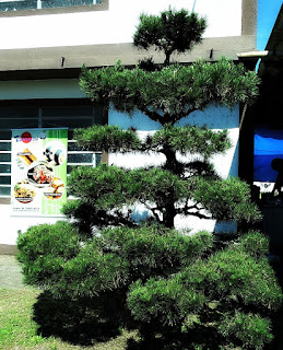Árvore Típica - Colônia Japonesa de Ivoti