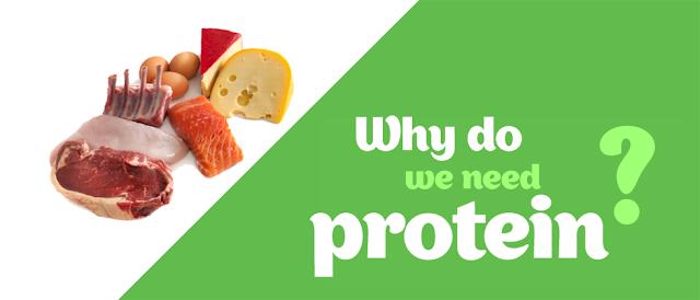 Apa Fungsi Dari Protein ?