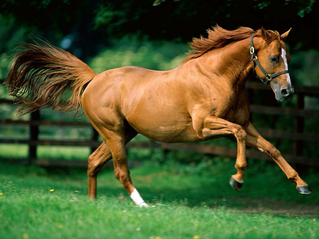 Encyclopedia: Horse Running - photo#1