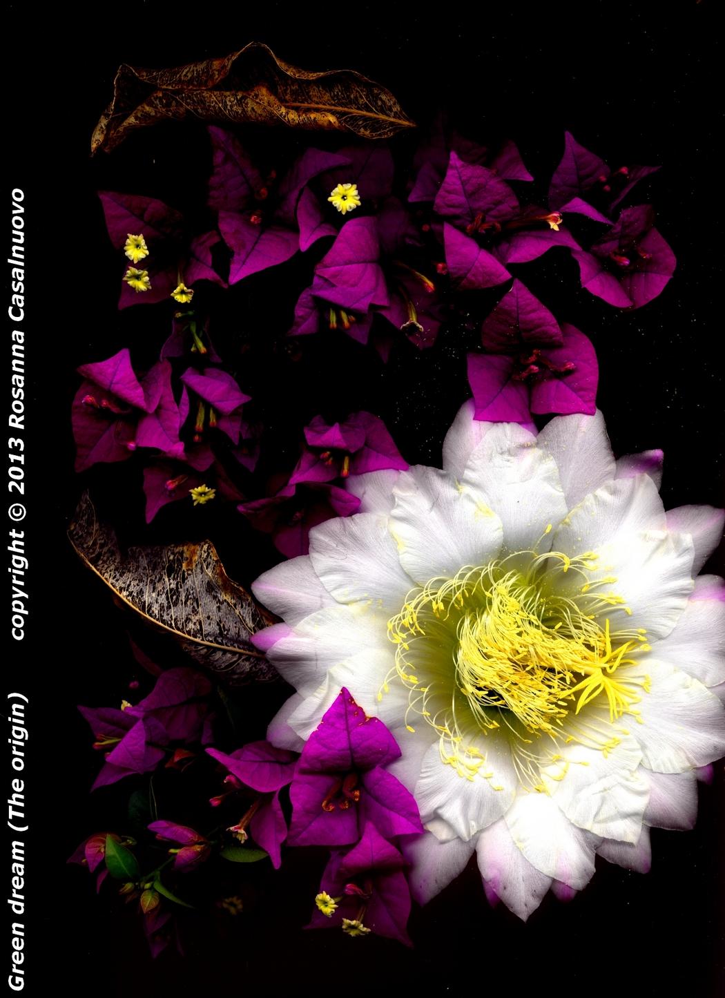 scannografia fiori bougainvillea cactus colori originali