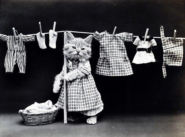 Starting Animal Clothing Store