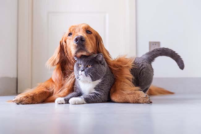 Miejsce psów w świecie zwierząt