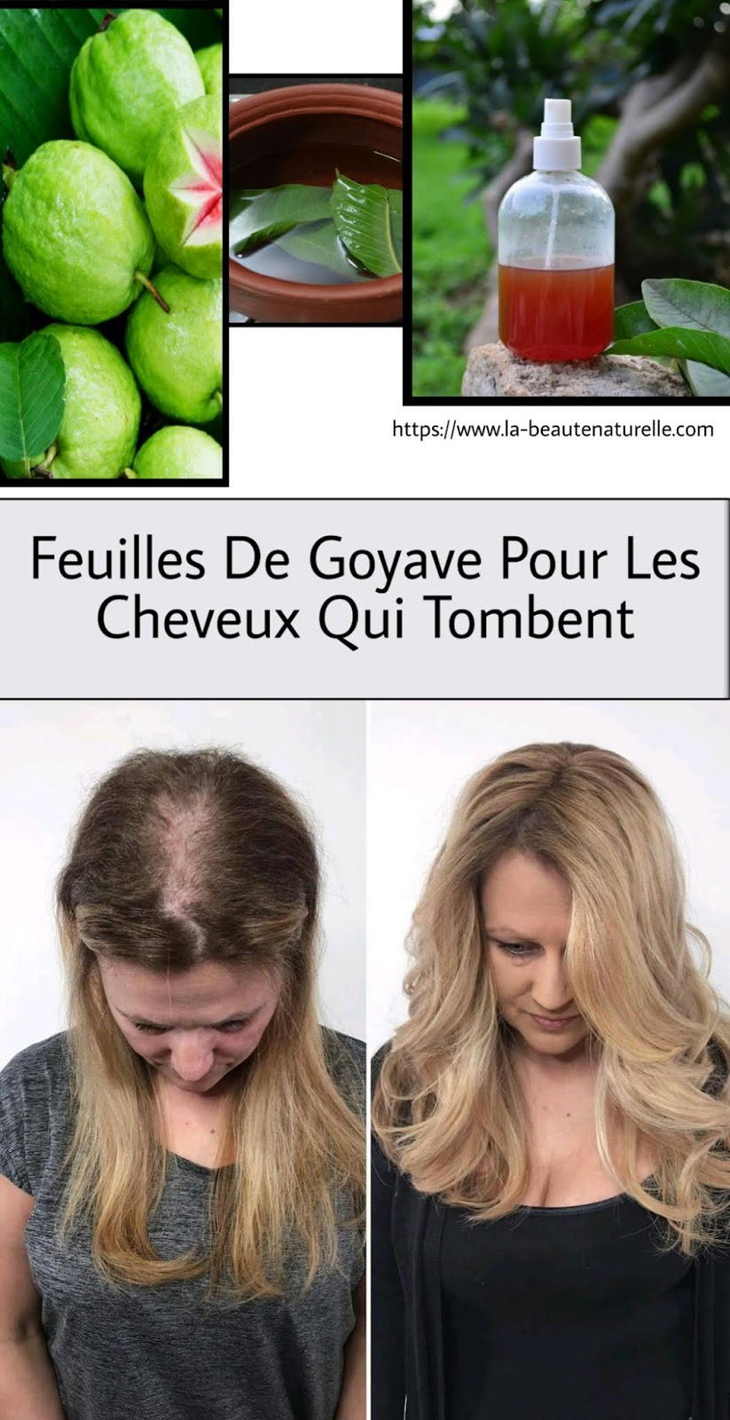 Feuilles De Goyave Pour Les Cheveux Qui Tombent