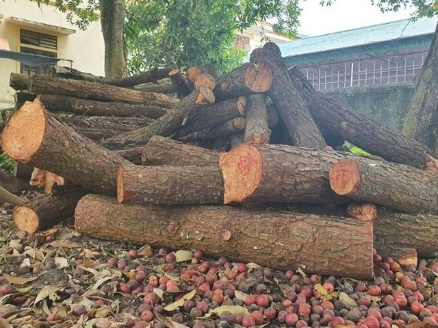 Rừng phòng hộ nằm sát ủy ban xã vẫn bị chặt phá tan hoang