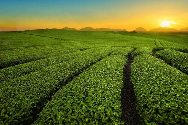 Du lịch Mộc Châu: Sức hấp dẫn trên cao nguyên xanh