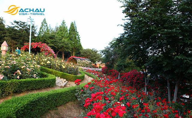 Du lịch Hàn Quốc tháng 5 để trải nghiệm lễ hội hoa hồng đầy thú vị1
