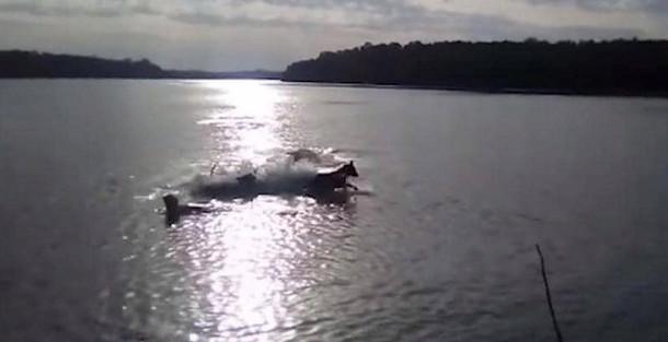 فيديو مؤثر.. تمساح ضخم يلتهم كلبا تحت أنظار صاحبه