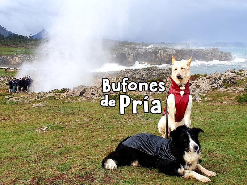 Bufones de Pría en Asturias con Perro