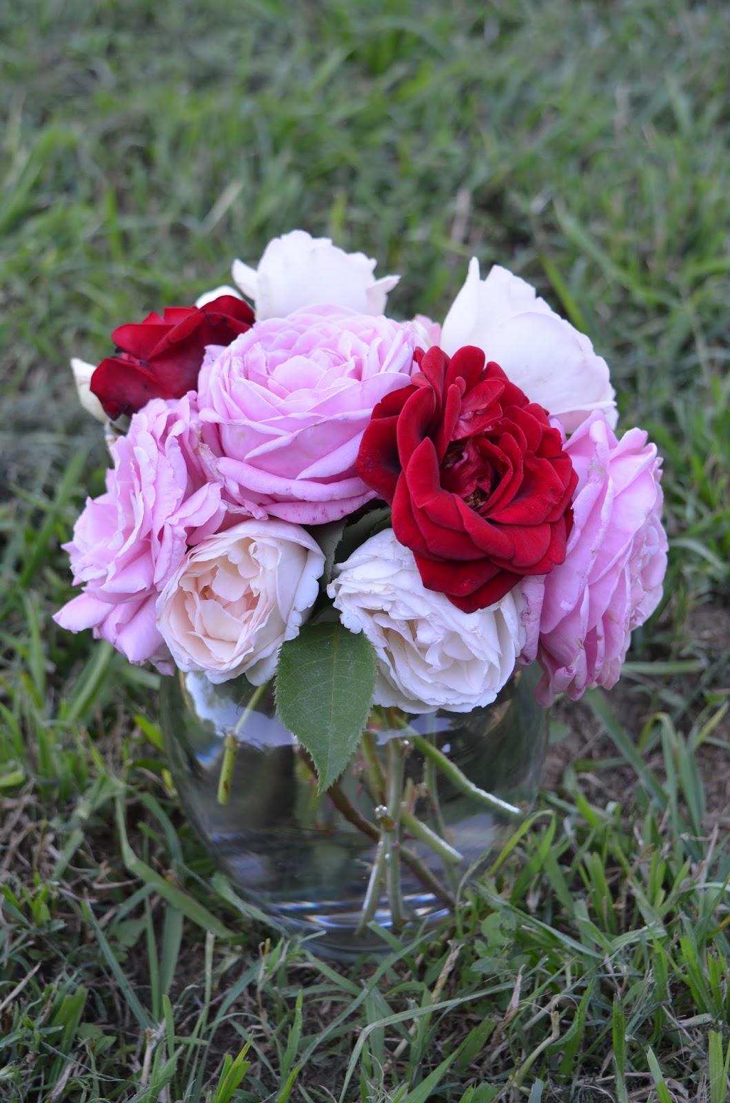 rebecca u0027s texas garden