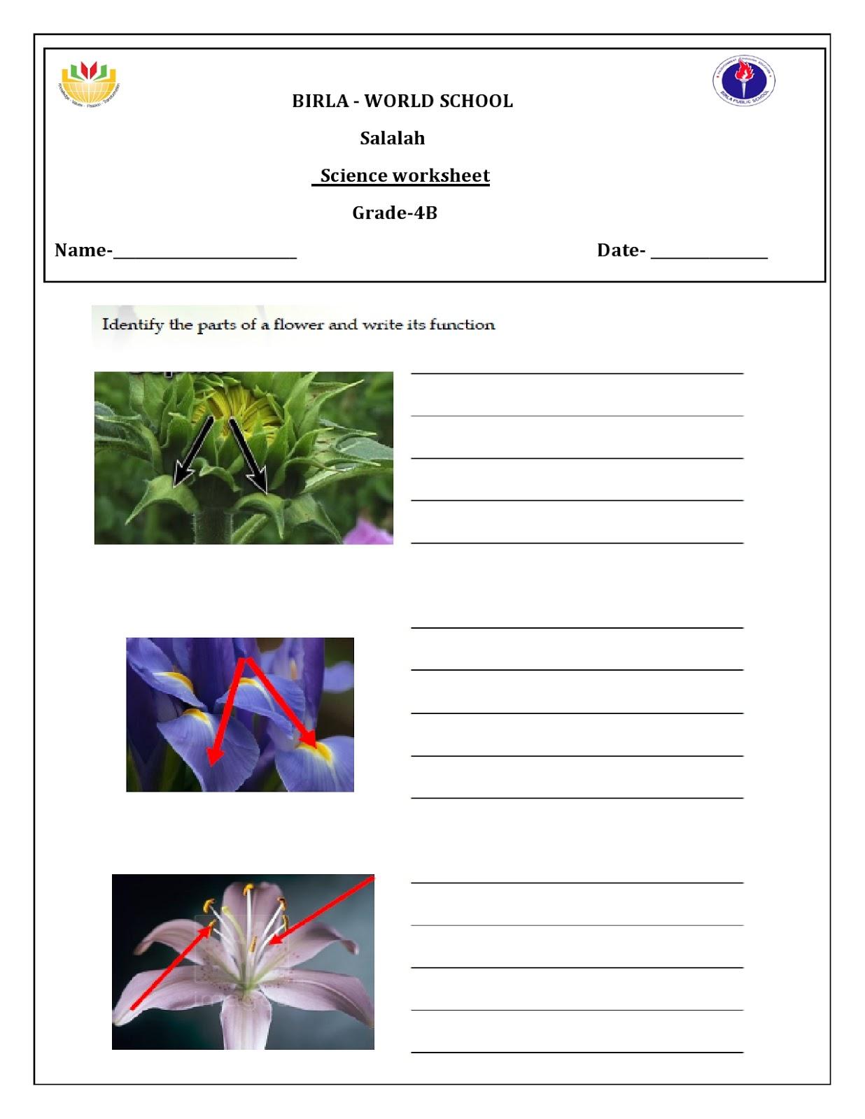 Birla World School Oman Homework For Grade 4 B On 01 12 16