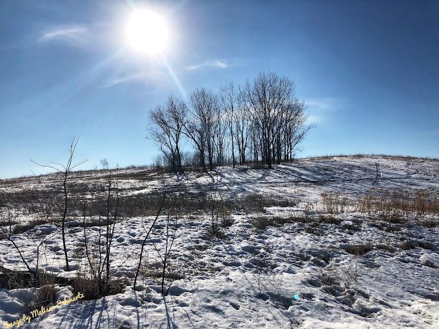 Winter Fading at Meacham Grove Nature Preserve.
