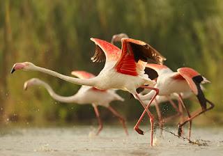 অতিথি পাখি-Guest Birds