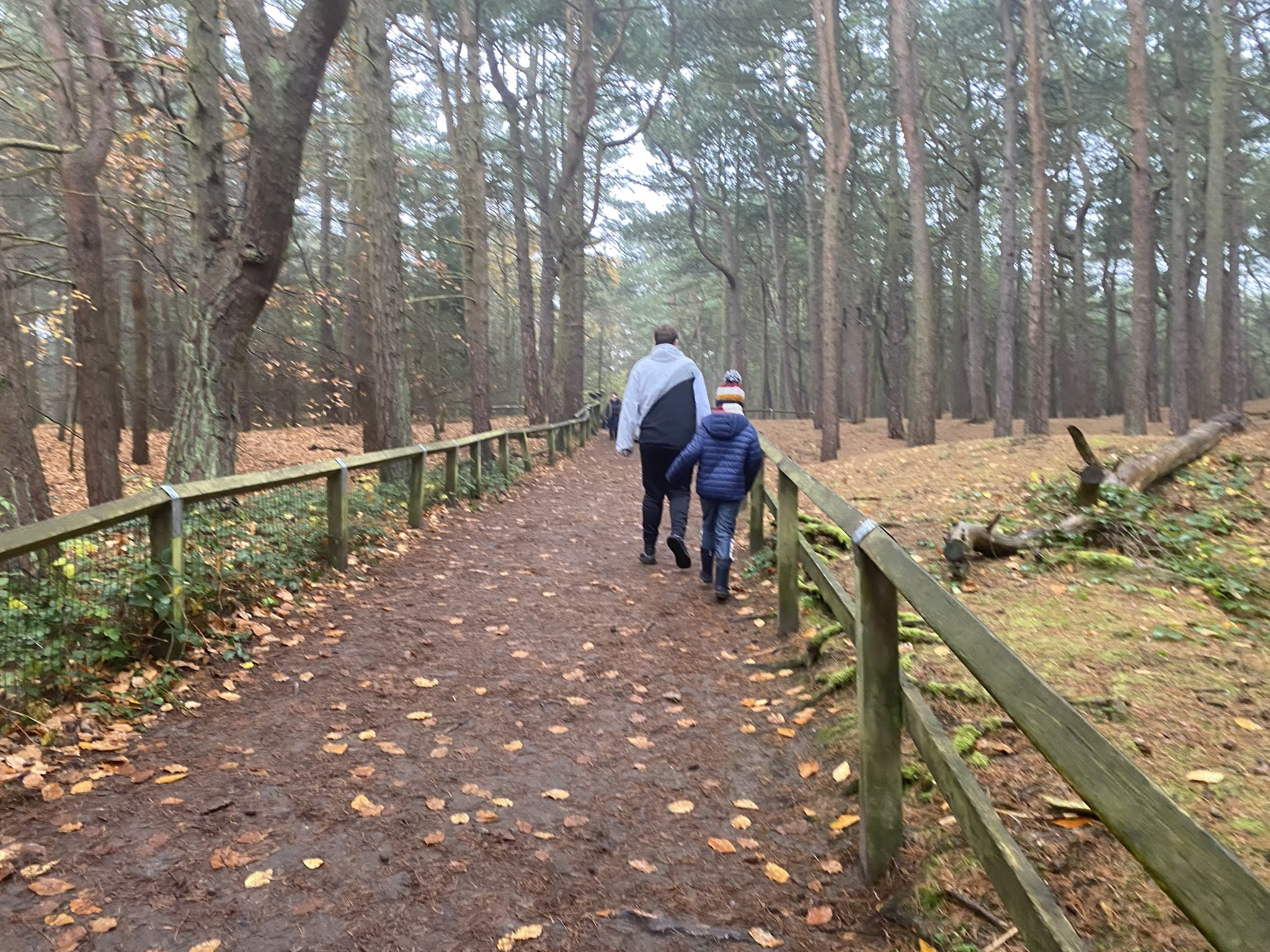 boys walking through the woods