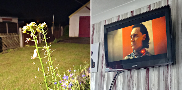 Flowers in the dark and Loki on the TV