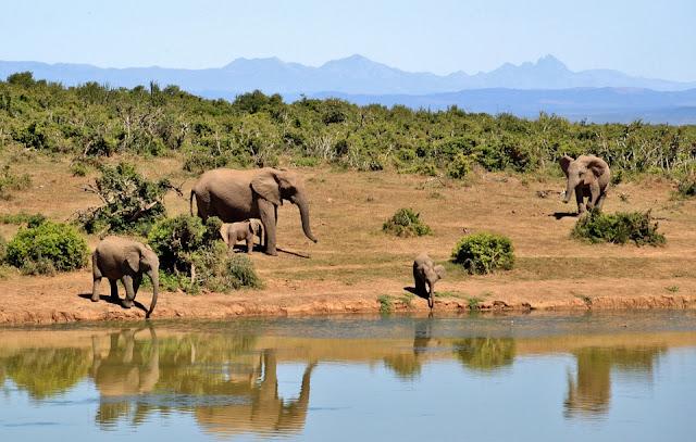 Lima Hal yang Perlu Dipertimbangkan Saat Berjalan di Safari Afrika