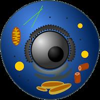 eukariot, eukariotik, eucaryote