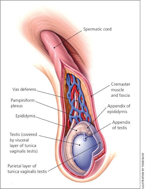 Korda Spermatik