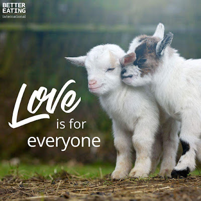 Love is for everyone - Rörelse för djurrätt