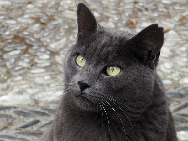 granada adopcion gatos