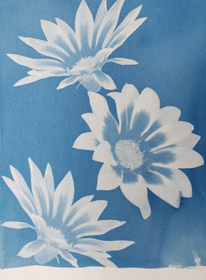 A cyanotype image of flowers and a blog post about vampires in New England