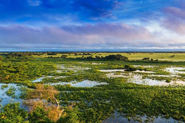 Dia do Pantanal marca luta pela preservação do bioma