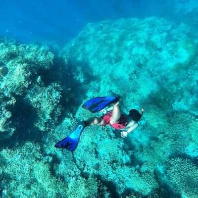 http://mandiriransel.blogspot.co.id/2015/11/pulau-menjangan-surga-bawah-laut-di-bali.html
