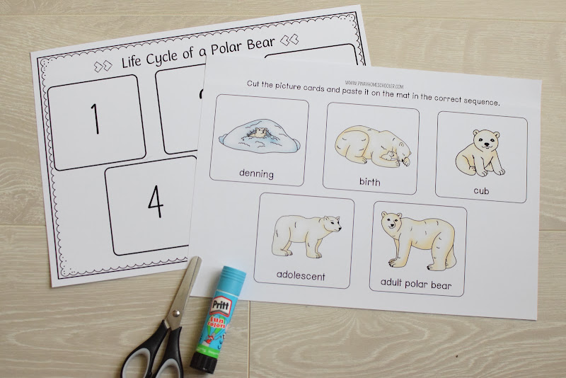 Polar Bear Life Cycle Sequencing Activity
