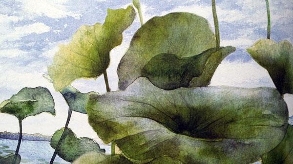 Illustrazione dal libro: La storia della libellula coraggiosa