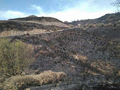El incendio de la cumbre de Gran Canaria pudo ser intencionado